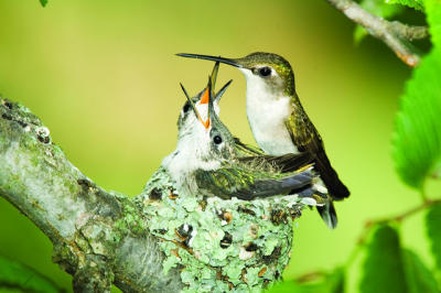 Hummingbird nests in Clearwater/Safety Harbor wild bird unlimited